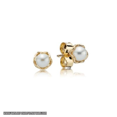 Pandora Collections Cultured Elegance Stud Earrings Pearl 14K Gold Cheap Sale